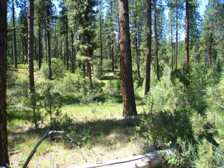 2014 Grayback Gulch Forest Service Acquisition: 67 acres